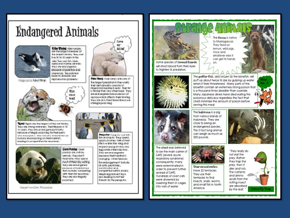 endangered species project The missing species report project missing species report educator letter  missing species report curriculum early elementary upper elementary middle.